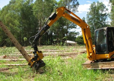 GMT035 falling eucalyptus