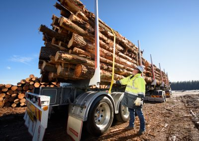 ExTe TU - Forest log haulage