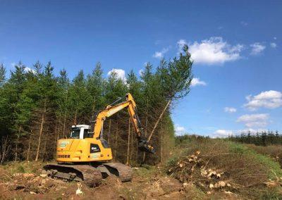 TMK400 tree shear felling pine